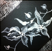 Lys Blanc Dessin Galerie Creation